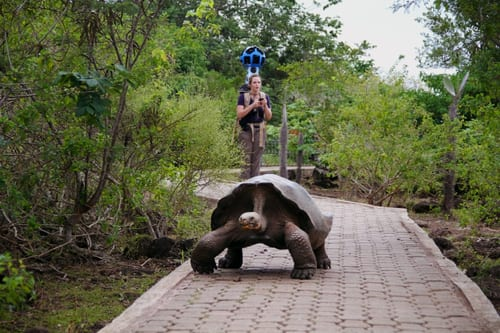 Google aims to bring Street View imaging to Galapagos Islands