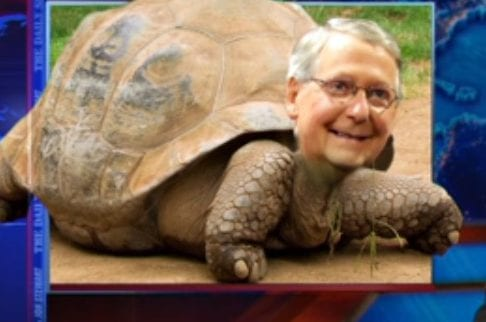 mitch mcconnell tortoise e1503441493342